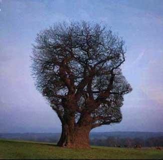 Un jodido árbol.