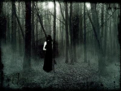 Un frondoso bosque.