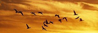 Pájaros perdidos (Fragmento)