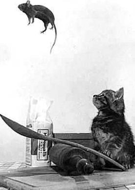 El ratón y el gato.